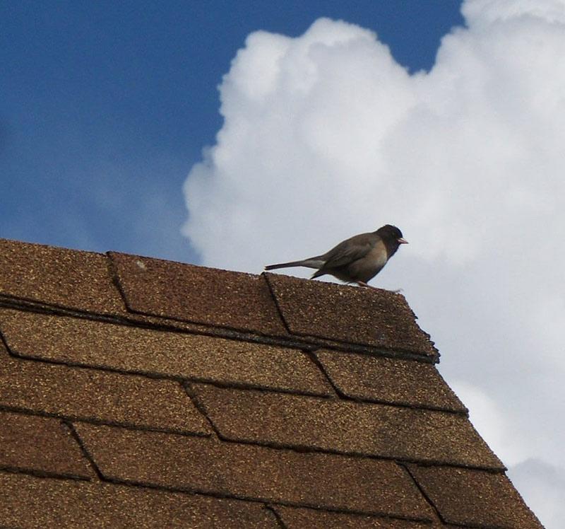 تاریخچه پوشش سقف شینگل